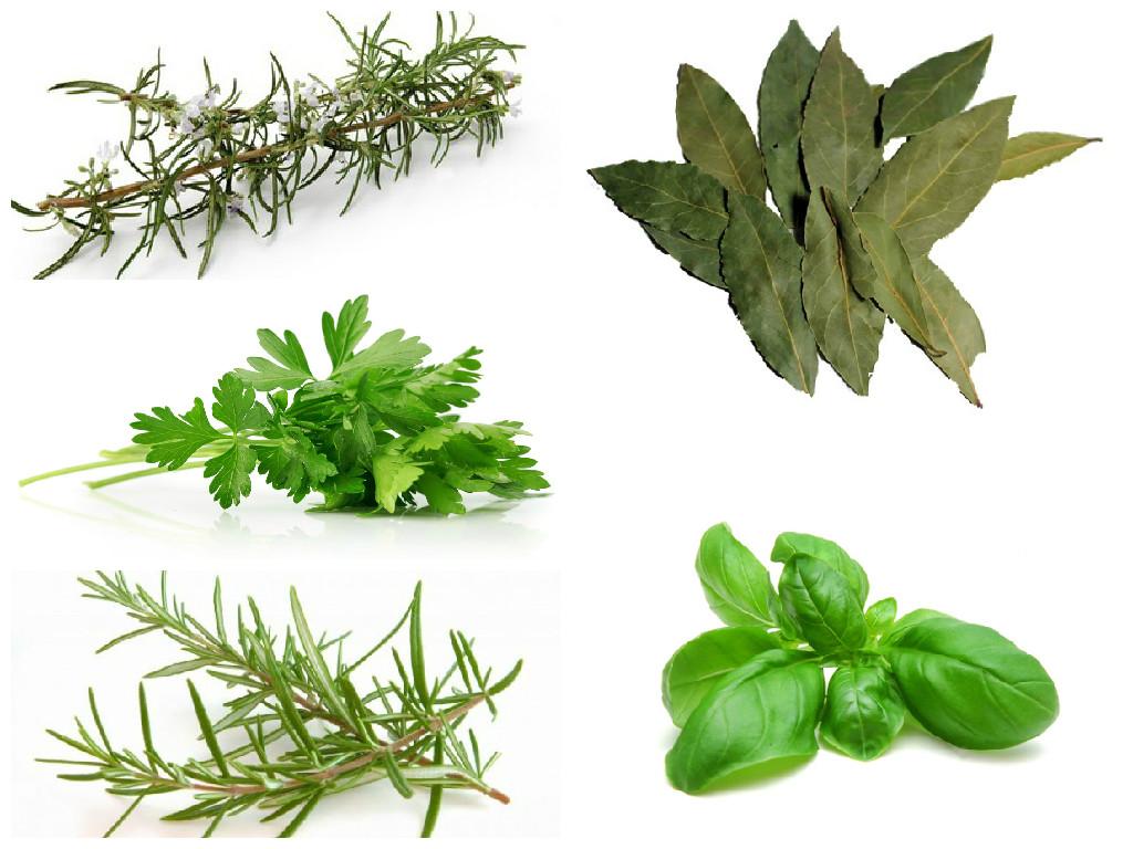 Casa-Matachin.Hierbas-aromaticas
